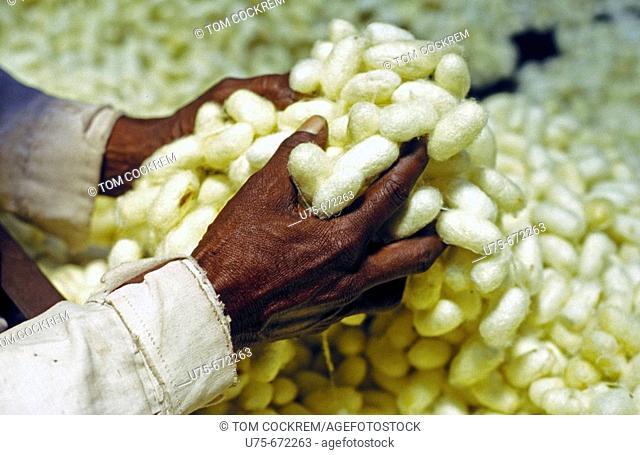 Man with silk, Tamil Nadu, India