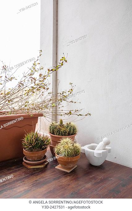 Cactus collections on woodden table
