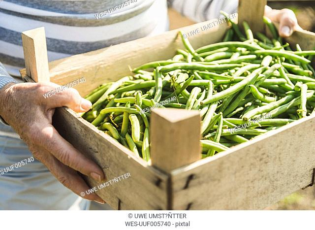 Woman holding crate with beans