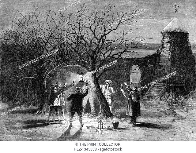 Wassailing apple trees with hot cider in Devonshire on twelfth eve, 1861. A print from The Illustrated London News, (12 January 1861)