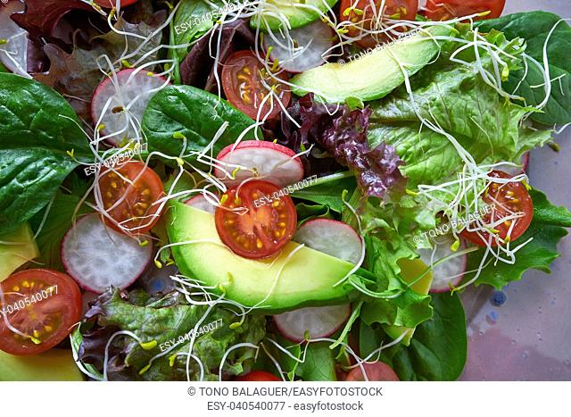 Avocado salad with sprouts tomatoes spinach and radish healthy food