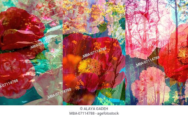 photomontage, shrubs, trees, flowers, multicoloured