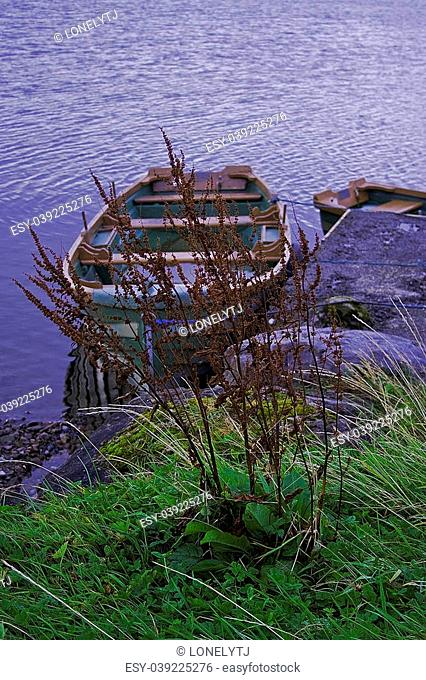 Barley stem and a boat, tickles by the wind. Co. Galway, Ireland. ProPhoto