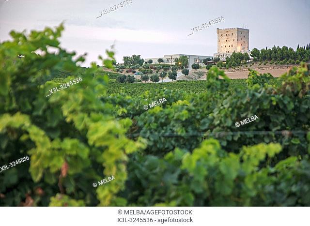 Pago de Cirsus. Ablitas. Navarre. Spain