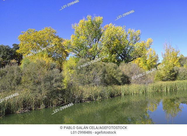 Río Manzanares, Parque regional, Madrid. Spain