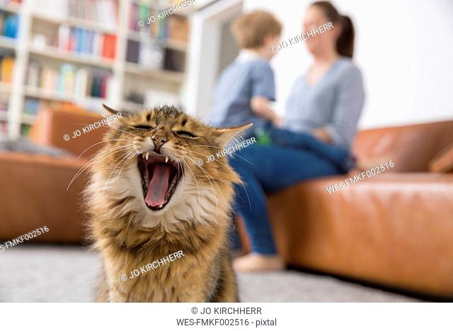 Yawning cat sitting in living room, mother and son playing in background