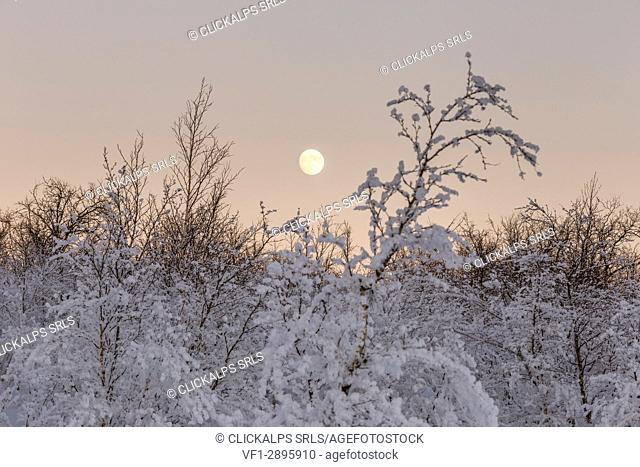 The full moon rises in the cold of the Swedish Lapland,Abisko,Kiruna,Sweden,Europe