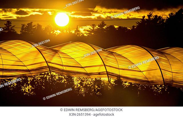 Greenhouses at sunset on a farm in Scarborough, Maine