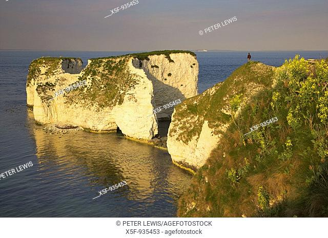Old Harry Rocks nr Swanage Dorset