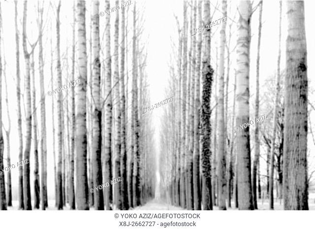 Switzerland, Canton Ticino, Gudo, Tree