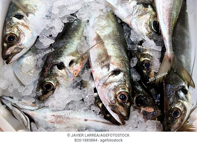 Fish auction, Fish market, Portonovo, Pontevedra province, Galicia, Spain