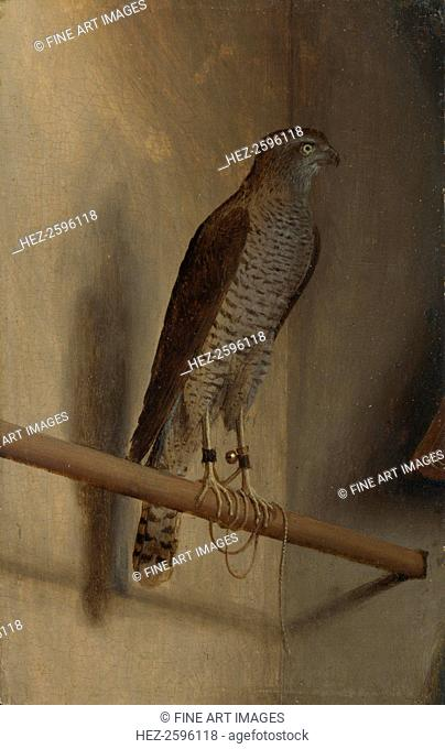 A Sparrowhawk, 1510s. Found in the collection of the National Gallery, London