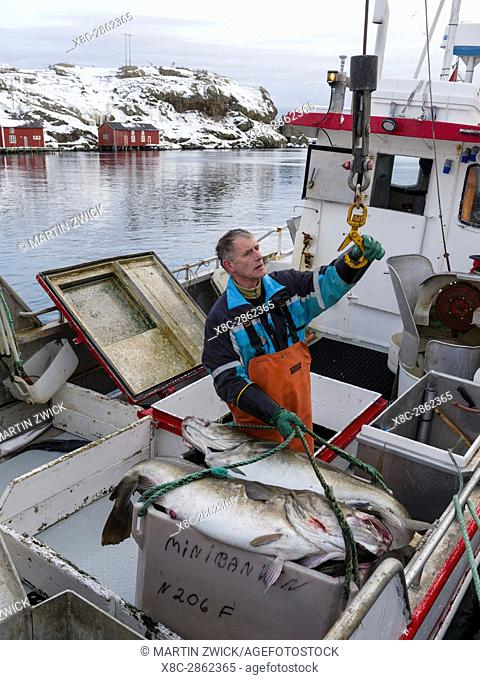 Fish factory and harbour, processing of atlantic cod for stockfish. Fishing village Sund on the Lofoten Islands in norhtern Norway during winter