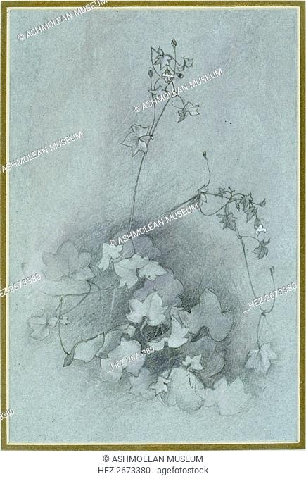 Ivy-Leaved Toadflax ('Oxford Ivy'), 1852. Artist: John Ruskin