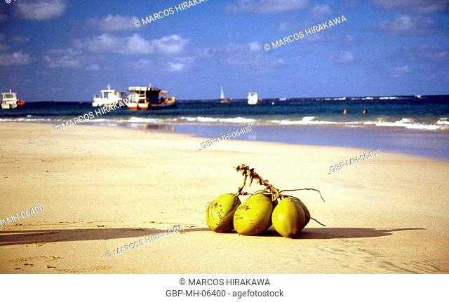 coconut tree, Porto de Galinhas, Pernambuco, Brazil, 02.1995