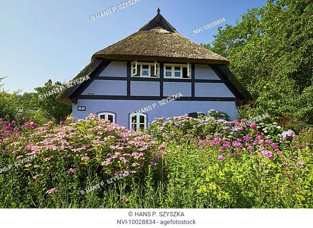 Thatched cottage in Quilitz, Lieper Winkel, Usedom, Mecklenburg Western Pomerania, Germany