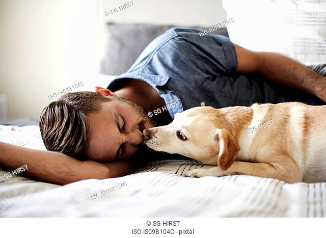 Young man lying on bed with dog licking his face