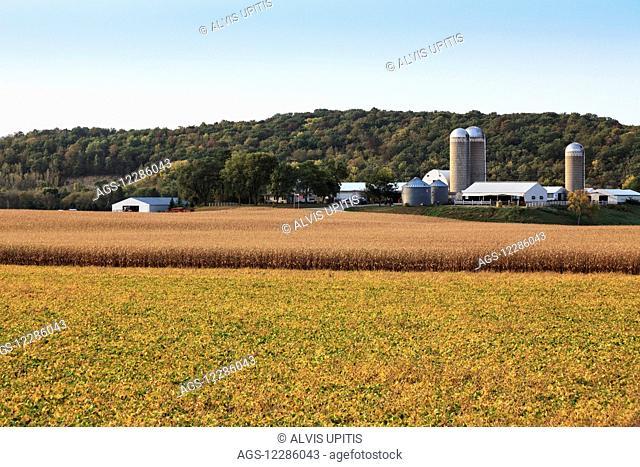 Corn and soybean fields in Southeast Minnesota; Byron, Minnesota, United States of America