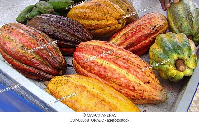 some cocoa cacao beans fruits