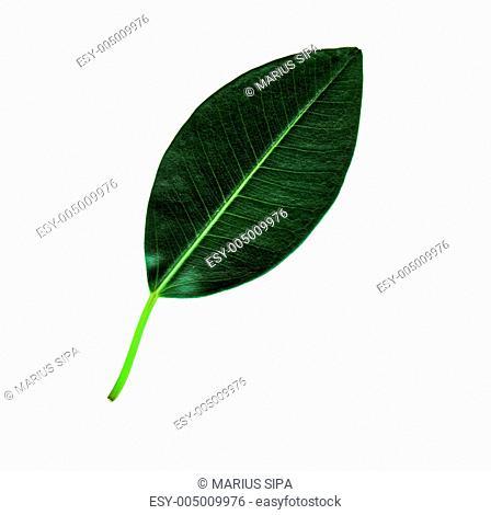 Leaf Front