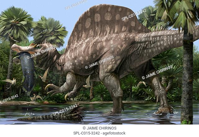 Spinosaurus (Spinosaurus aegyptiacus), artwork. Spinosaurus was a large theropod dinosaur that lived 155 million years ago