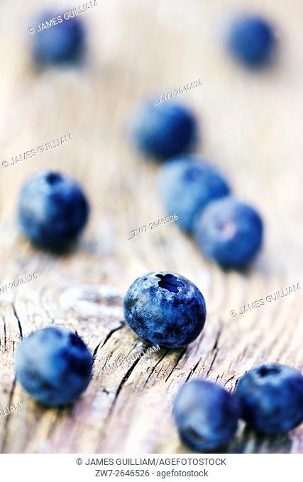 Blueberries variety Ventura