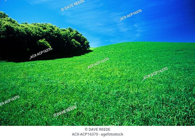 Green hay field, Tiger Hills, Manitoba, Canada
