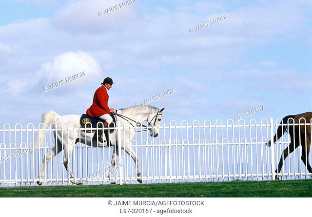 Race horse with steward
