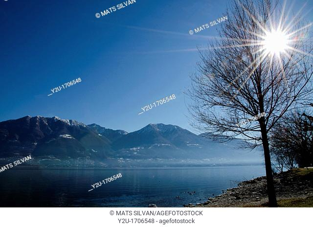 Tree on an alpine lakefront in backlight with sunbeams
