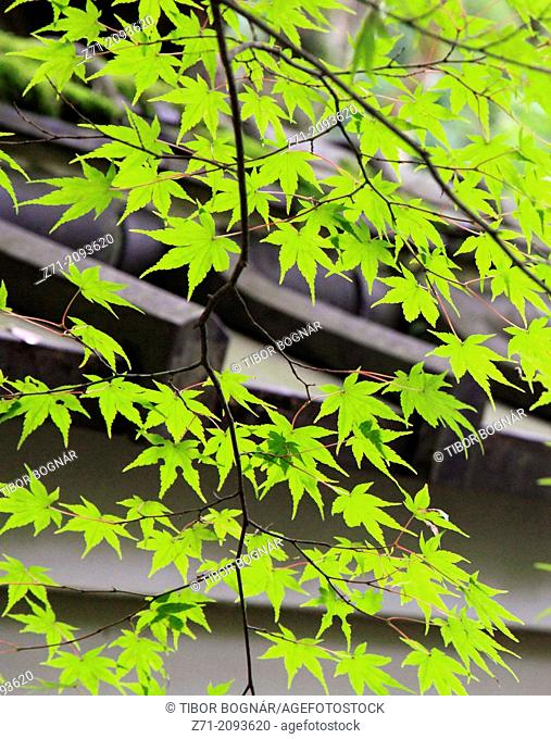 Japan, Kyoto, Daitokuji Temple, garden,