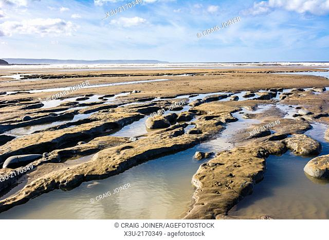 Clay and peat beds containing an ancient forest exposed on the beach at Westward Ho! shortly after the winter storms of 2014. North Devon, England
