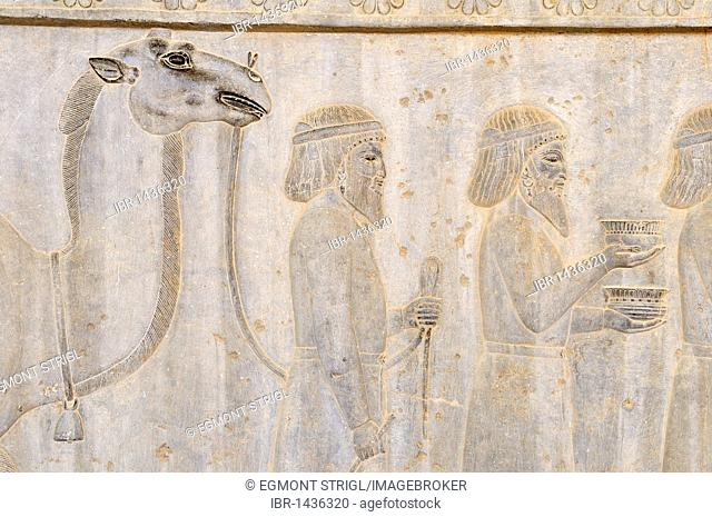 Bas-relief with camel on the Apadana Palace at the Achaemenid archeological site of Persepolis, UNESCO World Heritage Site, Persia, Iran, Asia