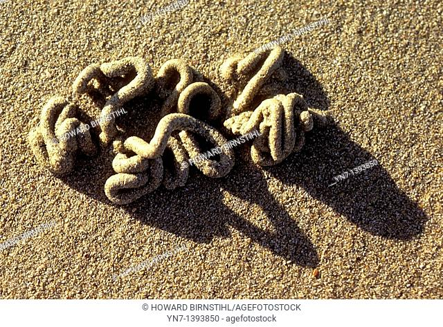 Looking like some oriental writing script a sandworm Phylum Annelida has left his signature markings on the sandy beach