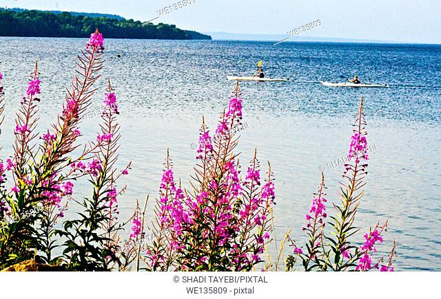 People on a boat in the sea and pink flowers in front of the picture in a city of jönköping in Sweden