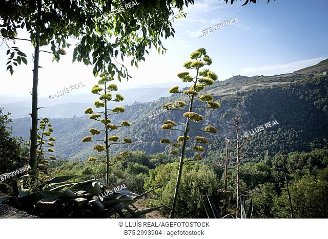 Early morning view of a landscape near San-Gavino-di-Tenda, Corsica, France
