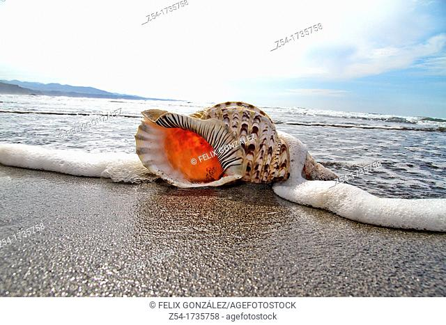 Shell in at beach, Ataltic Ocean, Asturias, Spain
