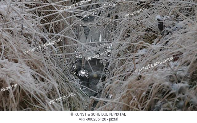The first ice of the coming winter is growing around wilted grasses hanging in a small waterfall