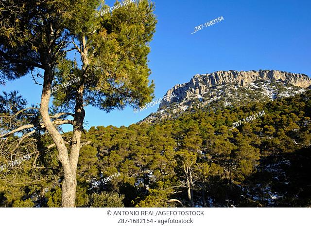 Parque Regional de Sierra Espuña  Alhama de Murcia  Murcia