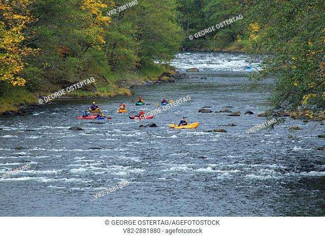 Kayaking in Clackamas Wild and Scenic River, West Cascades Scenic Byway, Mt Hood National Forest, Oregon