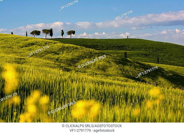 Spring in Tuscany, Val d'Orcia Italy