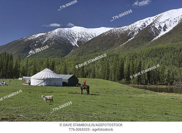 Home on the range; yurts at Kanas Lake National Park, Xinjiang, China