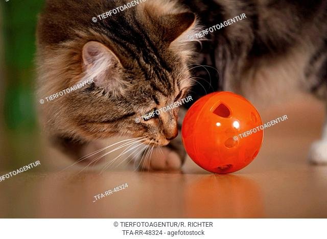 cat with food ball