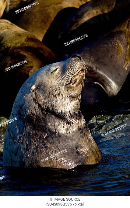 Sea lion basking in sun