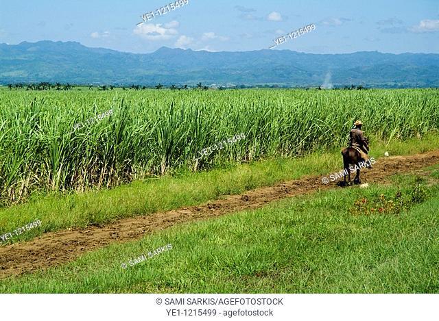 Farmer riding along a dirt road alongside a sugar cane plantation, Valle de los Ingenios, Cuba