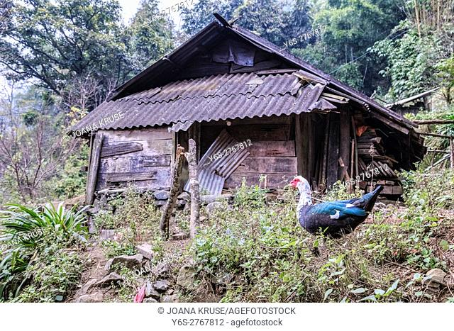 farm house in Xin Chai village, Lao Chai, Sapa, Vietnam, Asia