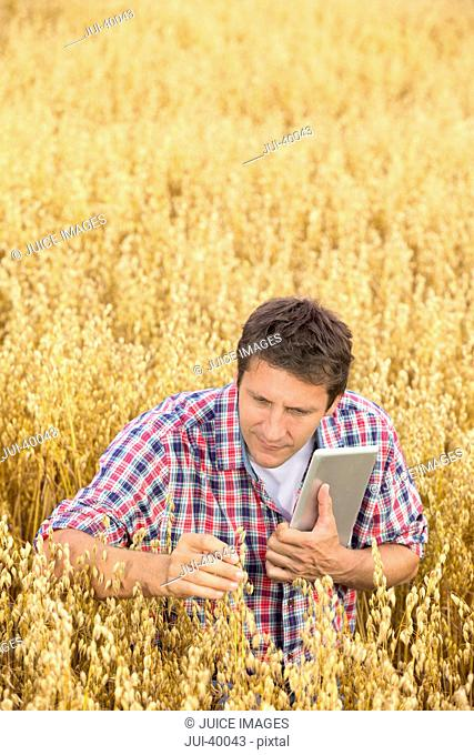 Farmer With Tablet Computer Inspecting Oat Crop In Field