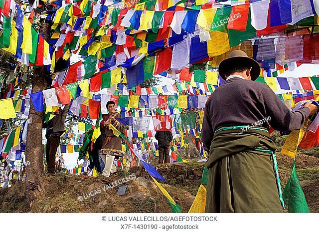 People hanging Tibetan prayer flags in Lhagyal Ri, near Tsuglagkhang complex,McLeod Ganj, Dharamsala, Himachal Pradesh state, India, Asia