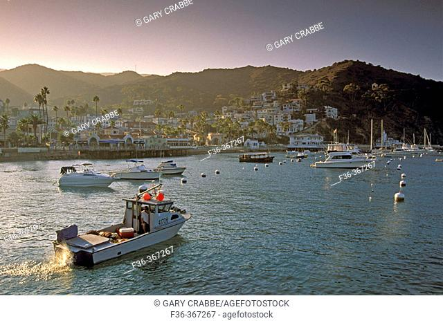 Commercial fishing boat and yachts anchored in Avalon Harbor at sunset. Catalina Island. California. USA