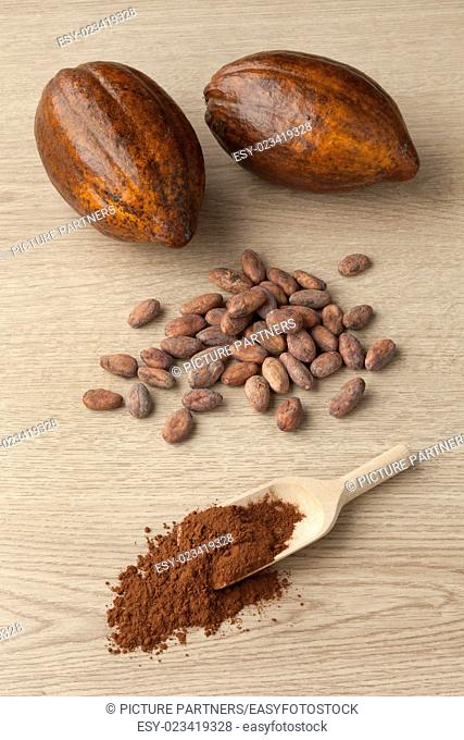 Cacao fruit, cocoa beans and cocoa powder on a wooden spoon