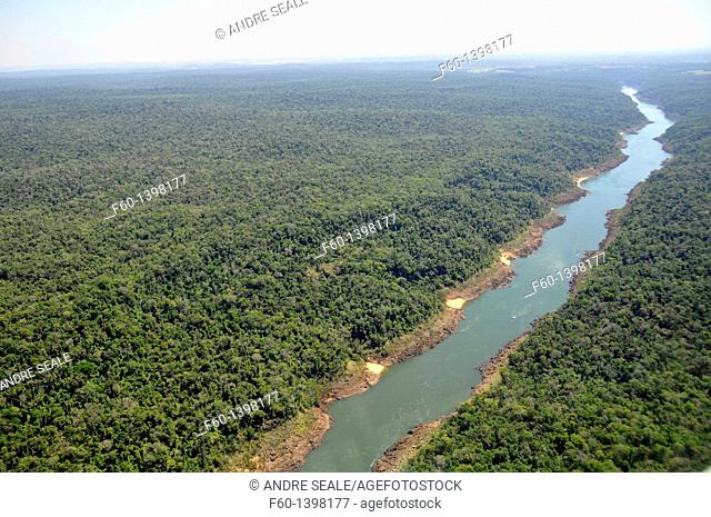 Forest surrounding Iguassu river which divides Brazil and Argentina